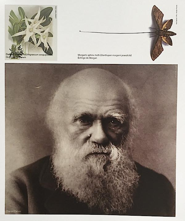 Charles Darwin as botanist