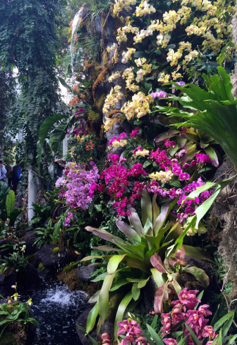 Orchidelirium: 2016 Orchid Show at the New York Botanical Garden