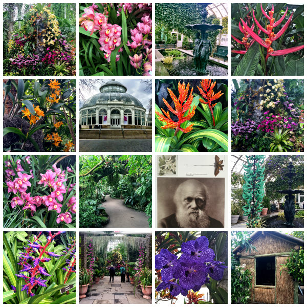 NYBG Orchid Show