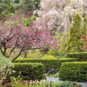 NYBG Perennial Garden