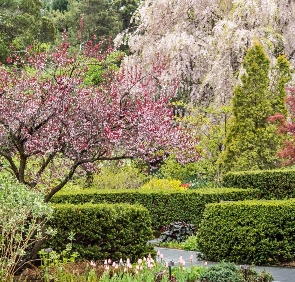 New York Botanical Garden Celebrates 125 Years Quintessence