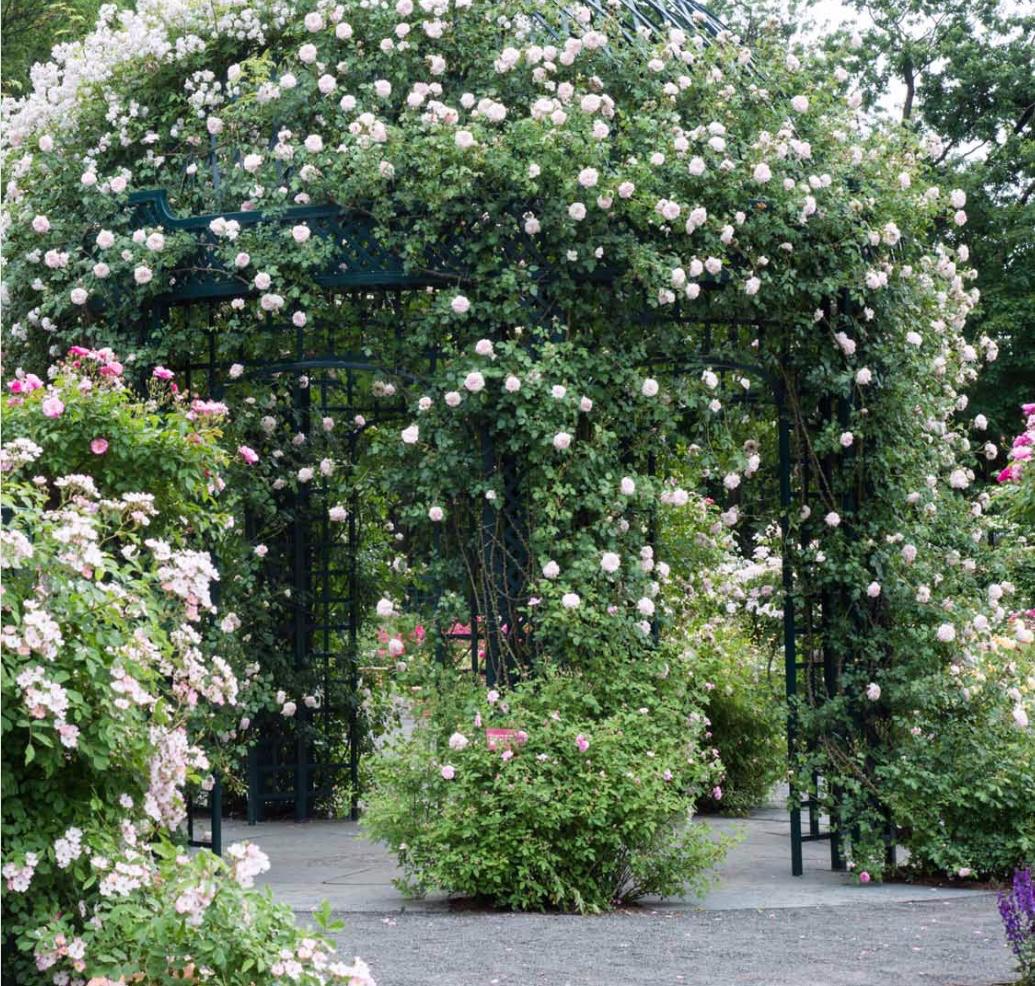 NYBG rose garden