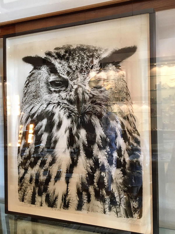 Jean Pagliuso owl portrait