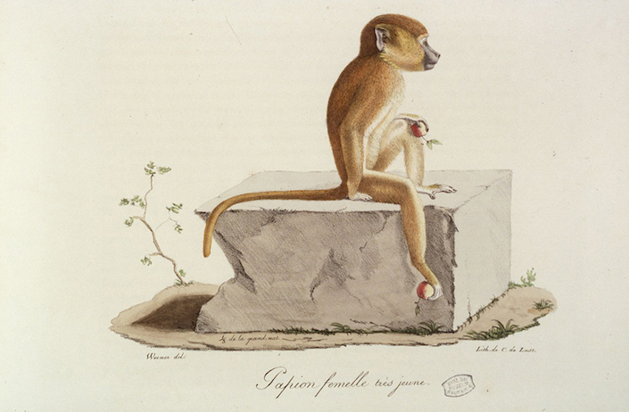 Monkey portrait from Arader Galleries at the San Francisco Fall Art & Antiques Show