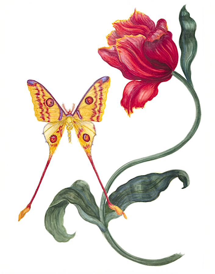 Carolyne Roehm watercolors - tulip-and-butterfly