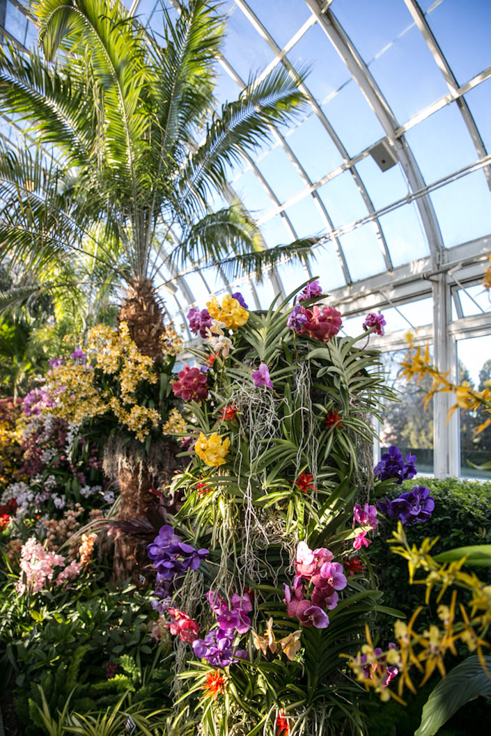 2017 Orchid Show at the NYBG