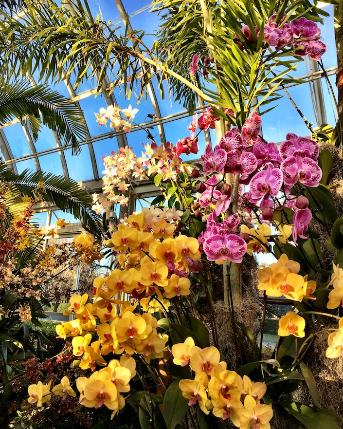 2017 Orchid Show