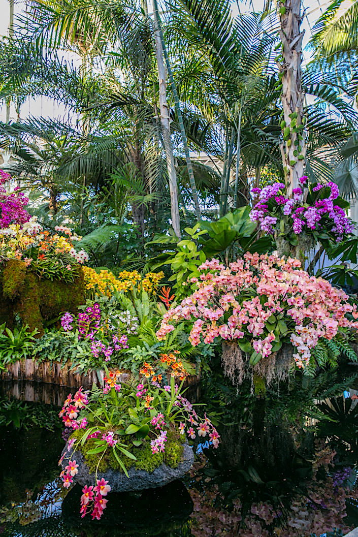 Display at the 2017 Orchid Show at the NYBG