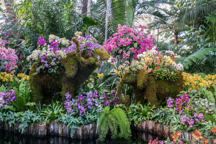 Elephant topiaries at the NYBG 2017 Orchid Show