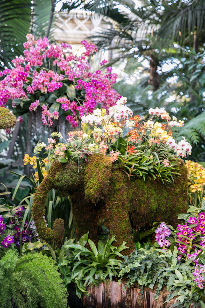 Elephant topiary at the New York Botanical Garden 2017 Orchid Show