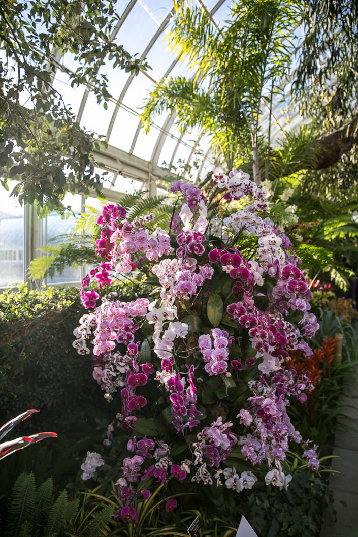 Orchid Show at the NYBG