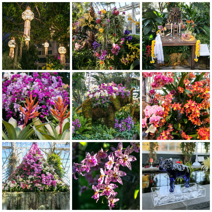 The Orchid Show – Thailand