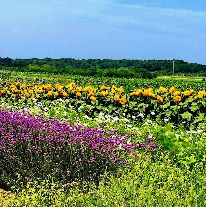 Bartlett Farms Nantucket via Quintessence