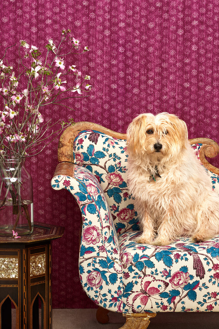 Schuyler Samperton dog's tricky and her new textile line-1