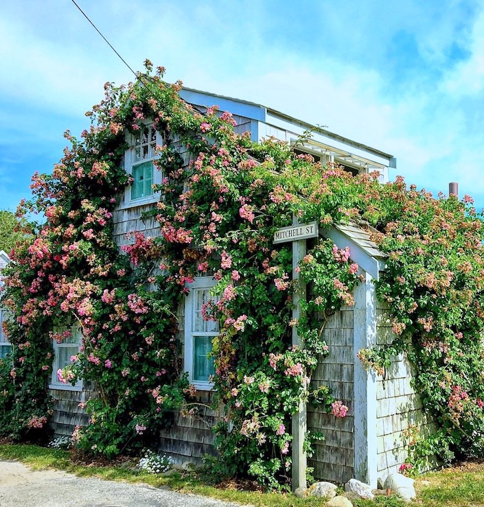 Sconset rose covered cottage via Quintessence