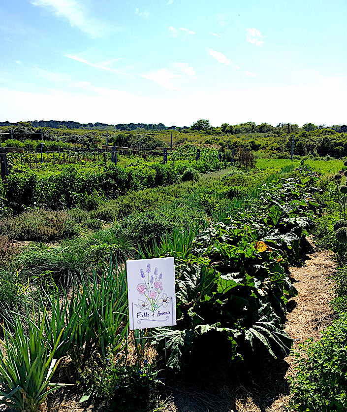 Fields of Ambrosia at Sustainable Nantucket Walter F. Ballinger Educational Community Farm
