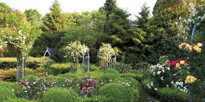 Peter Marino rose garden