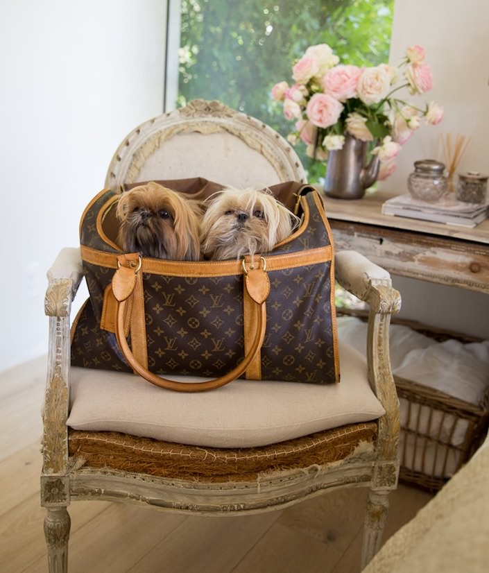 Giannetti's dogs in At Home with Dogs and Their Designers-1