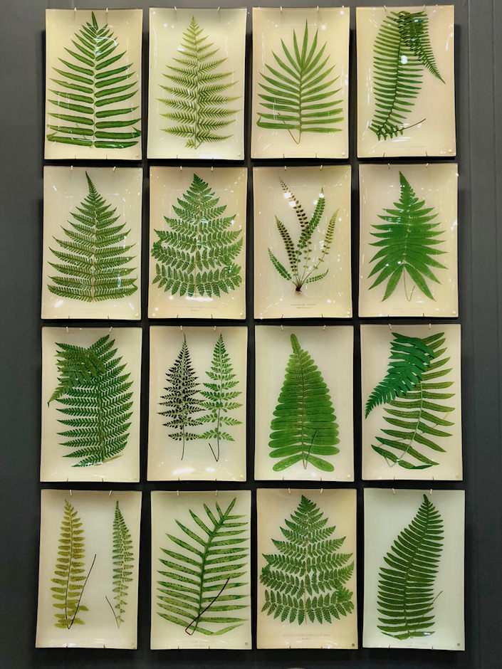 John Derian fern decoupage at NY Now Spring 2018