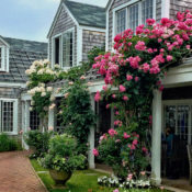 nantucket highlights via Quintessence