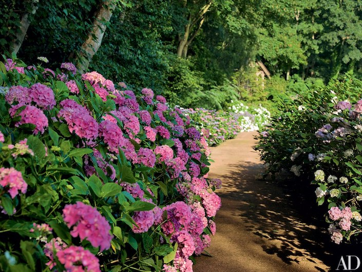 Pierre Berge Normandy house with winding hydrangea walk by Madison Cox, photo Pascal Chevallier for AD