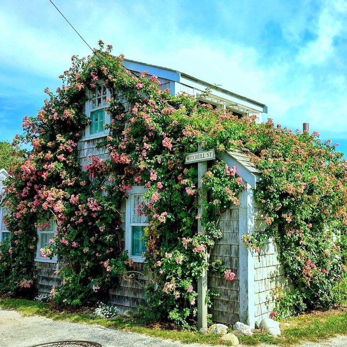 Sconset rose covered cottage via Quintessence-1