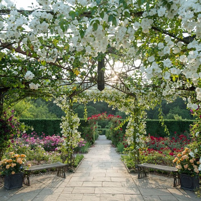 The-Queen-Mothers-Rose-Garden-in-summer-at-RHS-Garden-Rosemoor_-credit-RHS-and-Jim-Wileman