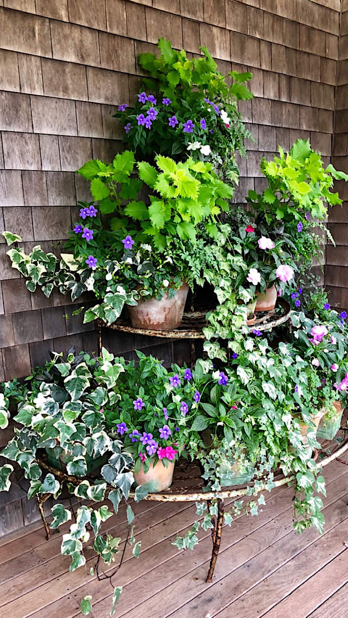 Nantucket porch plants 1