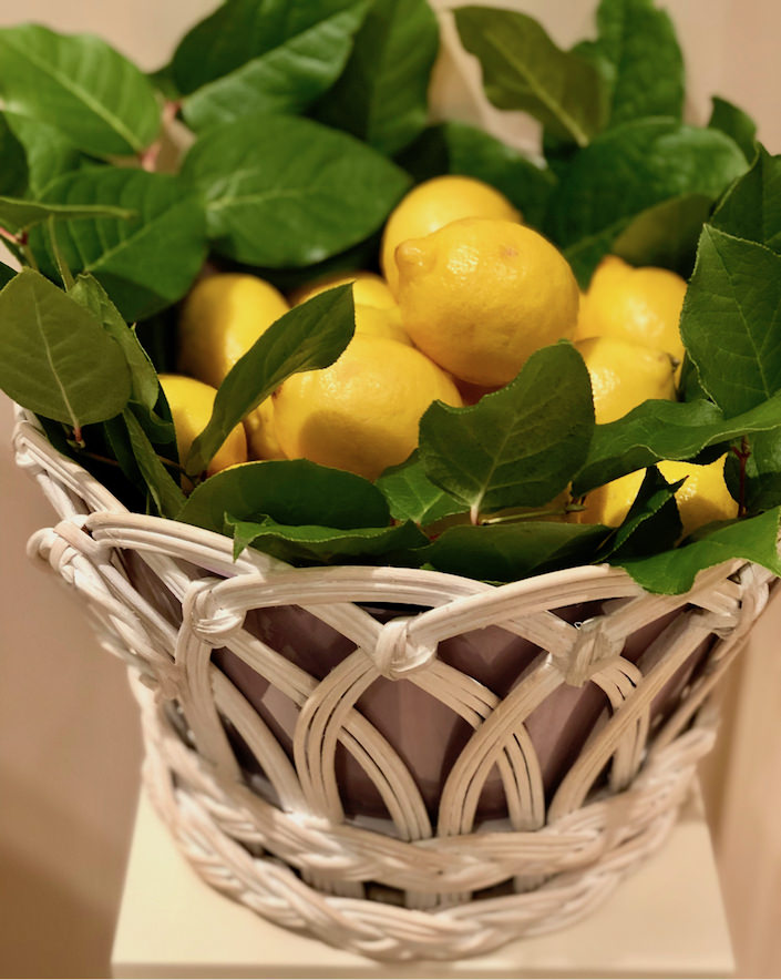 lemons in Alex Papachristidis cachepot for Moda Operandi