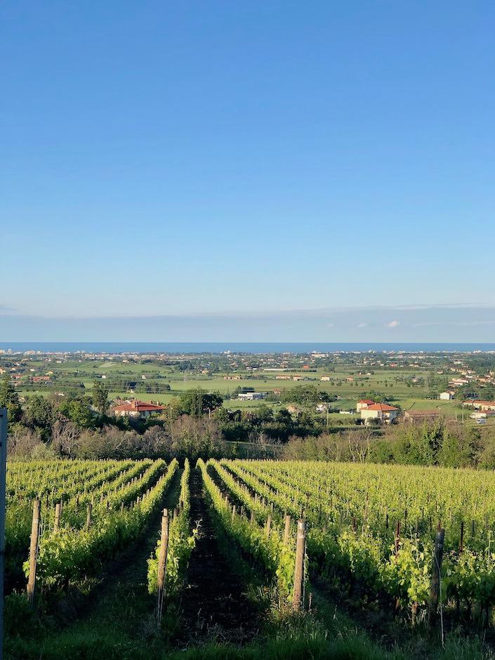 view toward Rimini from San Patrignano-1