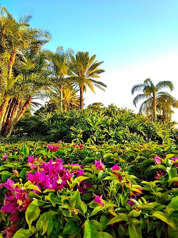 spring break in Florida