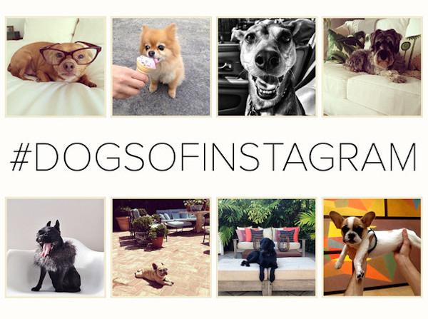 Four legged friends | Lonny Dogs on Instagram