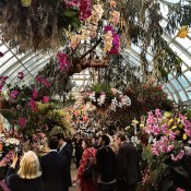 NY Botanical Garden Orchid Show
