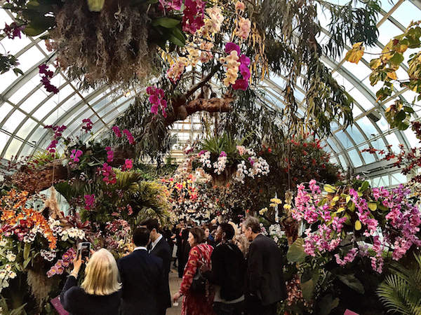 The New York Botanical Garden Orchid Show Quintessence