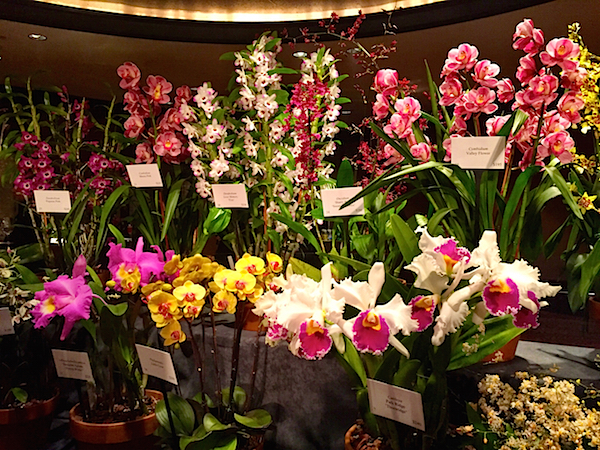 Orchid dinner 2015 flowers