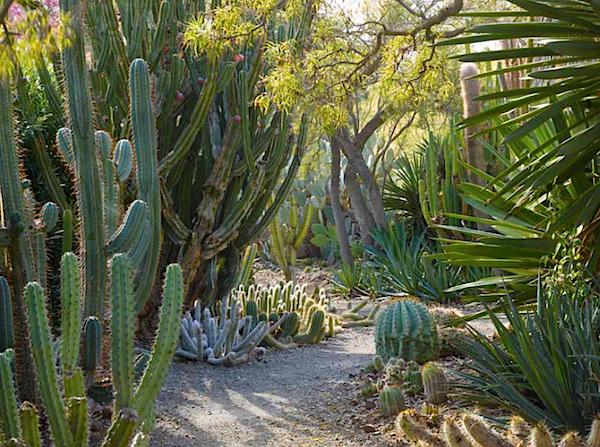 Ruth Bancroft Garden in Outstanding American Gardens