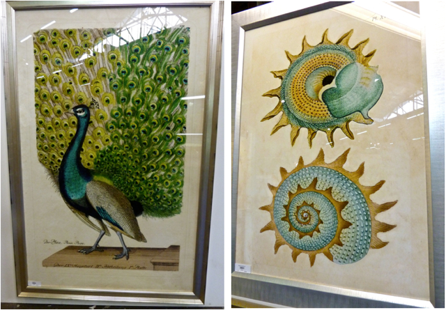 Wendover Art Peacock Print